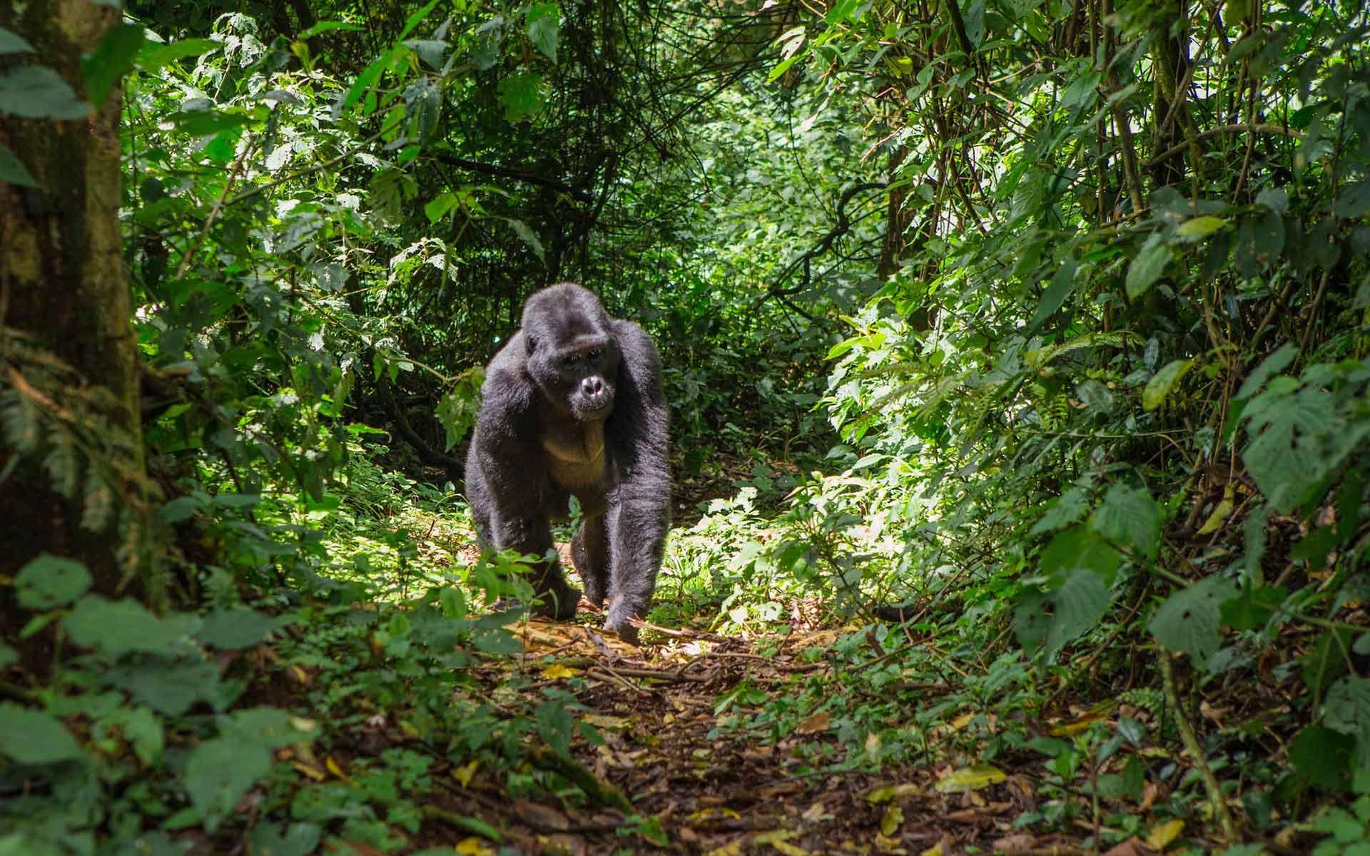 medtravel_gorilla